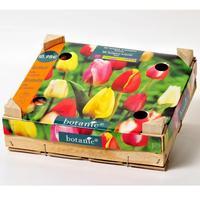 Botanic 50 tulipes triomphe mélange