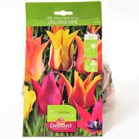 Delbard 25 tulipes fleur de lys coloris vifs
