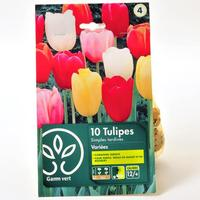 Gamm Vert 10 tulipes simples tardives variées