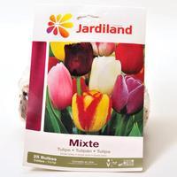 Jardiland Mixte, tulipes simples tardives