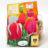 Jeanne de Laval 30 tulipes triomphe en mélange