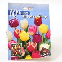 Leader Price 10 tulipes triumph en mélange