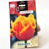 Meilland 12 tulipes frangées «La sevillana var. étincelle»