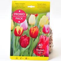 Theo de Boer Bv 40 tulipes triomphe