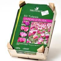 Truffaut 50 tulipes «Jardin d'Élisa»