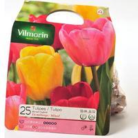 Vilmorin 25 tulipes Darwin hybride en mélange